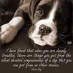 Special Dog Quotes