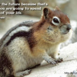 Squirrel Quotes And Sayings Tumblr