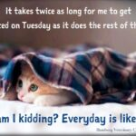 Tuesday Motivation Funny Facebook
