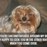 Witty Dog Quotes