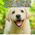You Can Always Find Hope In A Dog's Eyes Facebook